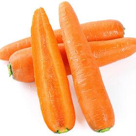 山东水果蔬菜胡萝卜5-10斤|现摘现发 清香脆爽 口感甜脆 富含多种维生素【应季蔬果】