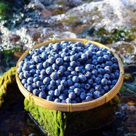 云南高原露天蓝莓   酸甜、爽口、果香浓郁 现摘现发