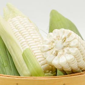 优选 | 牛奶玉米 可生吃 4.5斤 礼盒装  新鲜带叶发货 开袋即食水果玉米  包邮