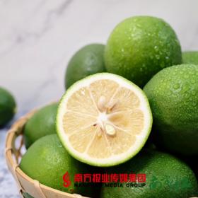 【全国包邮】海南青柠檬(72小时之内发货)
