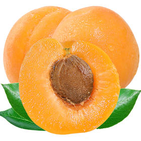 【顺丰包邮】山西金太阳大黄杏5斤|酸甜爽口 肉厚多汁 肉质细嫩【应季蔬果】