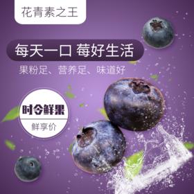 新鲜蓝莓时令水果现摘顺丰直发江浙沪包邮