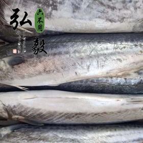 【弘毅生态农场】【弘毅六不用生态农场】深海捕捞 野生鲅鱼 捕捞 2斤左右/条