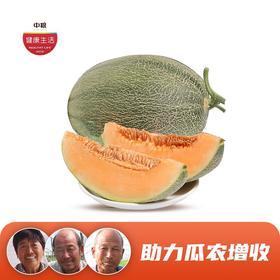 陕西哈密瓜 新鲜采摘 皮薄肉厚 脆甜多汁 6-7斤(2个) 产地&工厂直发 包邮