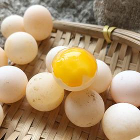 【顺丰包邮 110枚再送16枚】南丰生态甲鱼蛋 蛋壳透亮 营养丰富 Q弹嫩滑