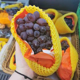 茉莉香葡萄 | 放在嘴里轻轻一吸果肉就滑出来了,没有籽,吃起来真的有股茉莉花香的味道~