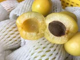 【新疆轮台小白杏】3斤左右 细腻绵甜 产地直发 绿色无污染