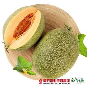 【珠三角包邮】海南哈密瓜 2.5-3.5斤/ 个 2个/份(次日到货)