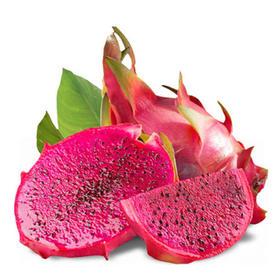 【云南】时令水果现摘发货金都一号火龙果