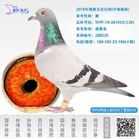 2019年精挑五关台鸽-雌-编号200229