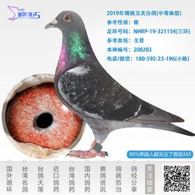 2019年精挑五关台鸽-雄-编号200203