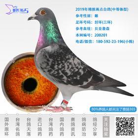2019年精挑雨点台鸽-雌-编号200201