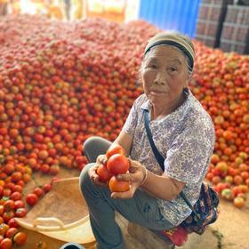 【紧急助农】云南上万吨番茄滞销,再不采摘就烂了!农户心急如焚,5斤仅14.8元包邮,恳请转发助力,共渡难关!