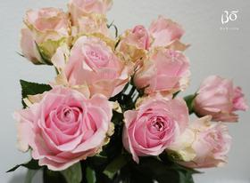 A级 娇兰玫瑰