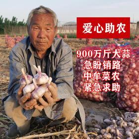 助销河南900万斤紫皮大蒜,蒜香浓郁,香辣十足,请您帮忙转发助力,帮助蒜农度过难关!
