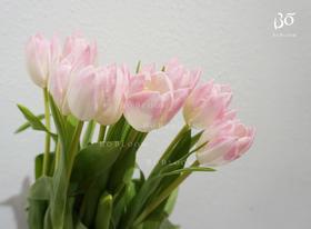 荷兰A级浅粉单瓣郁金香