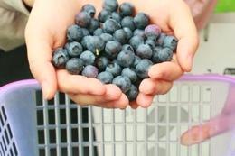 【蓝莓采摘来啦!】嘉兴600亩蓝莓熟了!单人票29.9元,畅吃蓝莓+免费送2斤!1大1小采摘+外带3斤仅需49.9元!30分钟车程,超适合周末游~