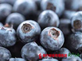 【珠三角包邮】15mm枝纯蓝莓 125g/ 盒  12盒/ 箱 (6月8日到货)