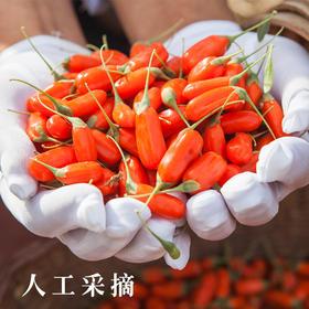 农道好物优品丨鲜果枸杞 原产地皮薄多汁 传统人工种植 新鲜水果 2020鲜枸杞水果