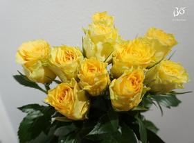 A级 瓦伦西亚玫瑰