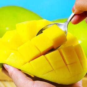 四川攀枝花凯特芒果当季新鲜水果整箱10斤特大青芒非甜心贵妃包邮
