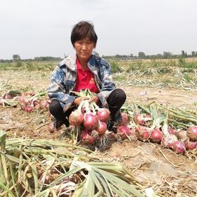 助力河南紫皮洋葱!价格暴跌,2毛钱一斤也难卖,恳请您的加入,一起帮助农民!