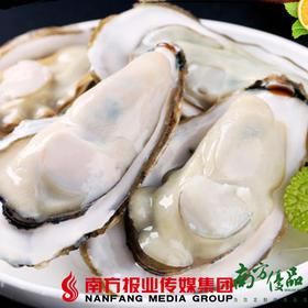 【珠三角包邮】福建大生蚝(15头)3斤±2两 (6月19日到货)