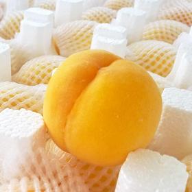 【当季上新】蒙阴黄桃 山东蒙阴新鲜黄桃水果黄肉蜜桃黄金黄桃 新鲜水果 产地直发