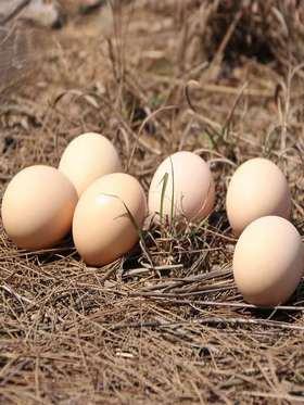 纯农家本地笨鸡蛋90枚70元