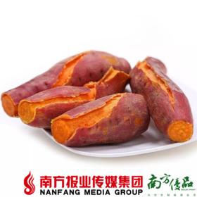 【全国包邮】湛江西瓜红 毛重红薯 10斤±2两 (48小时之内发货)