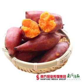 【珠三角包邮】湛江西瓜红红薯 10斤±3两/ 份   (7月31日到货)