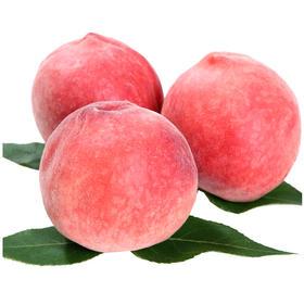 春雪水蜜桃 5斤 20个左右(果派)