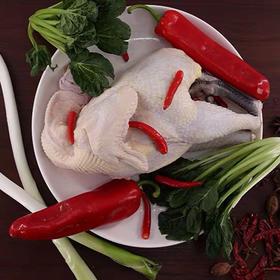 伊犁尼雅黑鸡 1.2kg左右/只