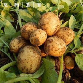 慈愿农业|有机标准种植土豆 皮薄 淀粉含量高 果肉细腻【 限量供应】