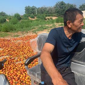 【助农公益】助力销售黄心油桃,帮助果农走出销路遇困状况,现摘现发5斤带箱 顺丰包邮