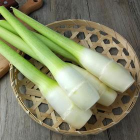 优选 | 新鲜岳西茭白 地标产品 个大脆嫩 产地直发 清炒烧肉都鲜美 3斤装  包邮
