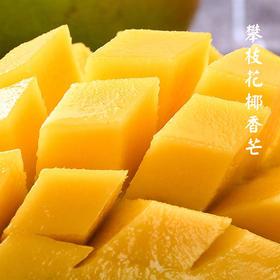 [攀枝花椰香芒 ]甜味浓郁 独特奶香 5斤装(12-15颗)