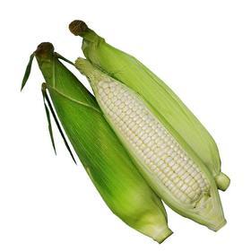 【云南】牛奶冰糖玉米 一口爆浆的超甜玉米4斤(6-8根)