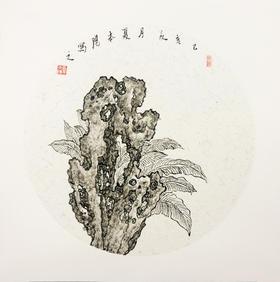 直播15号 夏本阳0.6平尺 23*23cm