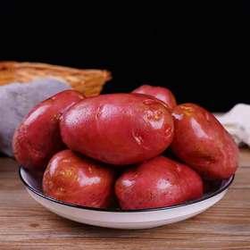 云南红皮土豆  新鲜现挖  鲜味直达  农家种植  新鲜采摘精选大货