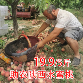 【战役助农】陕西大荔水蜜桃  营养美味  脆甜多汁 产地直发 !带箱5斤包邮