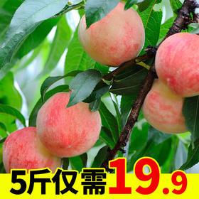 新鲜水果水蜜桃5斤脆甜大桃子当季毛桃整箱包邮应季超甜