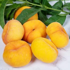 【陕西】黄金蟠桃 爆甜多汁 皮薄肉厚 颜值高 新鲜采摘 产地直发