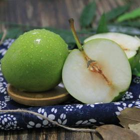 应季上新丨陕西蒲城早酥梨 表皮精致 颜值颇高 身材棒棒哒 每一口都是肉厚多汁