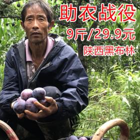 【战役助农】陕西黑布林,酸甜宜人,肉厚多汁,营养丰富~ 产地直发