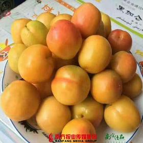 【珠三角包邮】绵软香甜-新疆色买提杏 4斤/ 框 (7月6日到货)