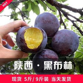 陕西黑布林3斤5斤10斤现摘孕妇酸甜李子当季新鲜水果李子