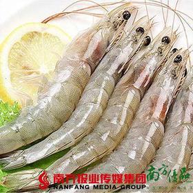 【广东省包邮】公港白对虾28-32头/斤  (48小时之内发货)