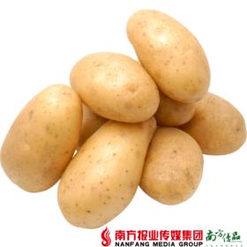 【全国包邮】紫阳富硒高山土豆 5斤±2两/箱 (48小时之内发货)