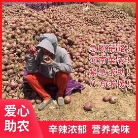 助销河南2000万斤紫皮洋葱 葱味浓郁 辛辣有度 请您帮忙转发助力 帮助农民度过难关!
